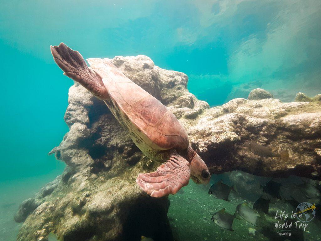 Life is a World Trip - Kombireise nach Mauritius und La Réunion. Schildkröten Observatorium Kelonia.